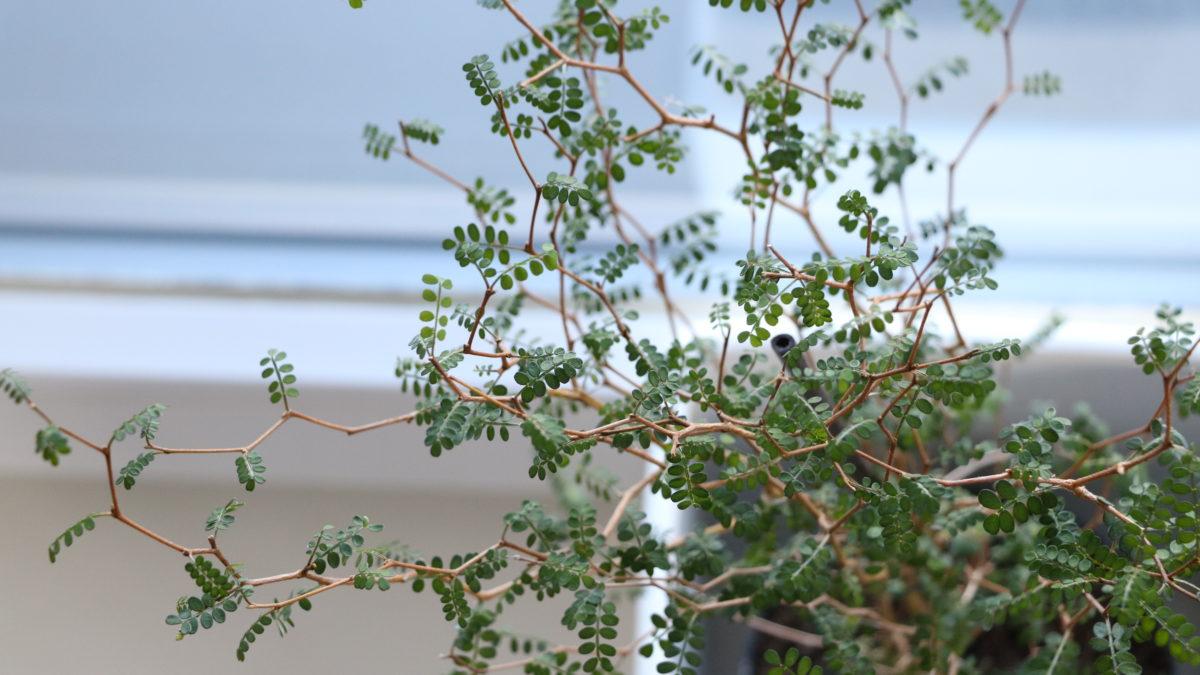 Moderní květinářství: pokojové rostliny